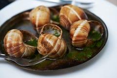 Opinião do close-up caracóis cozidos com manteiga de alho fotografia de stock