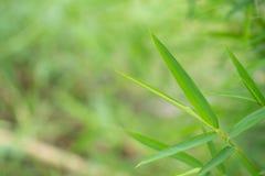 Opini?o do close up das folhas de bambu no fundo borrado imagens de stock royalty free