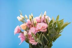 Opinião do close-up de flores e dos botões de florescência bonitos com folhas verdes Fotos de Stock