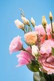 Opinião do close-up de flores e dos botões de florescência bonitos com folhas verdes Fotografia de Stock Royalty Free