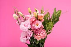 Opinião do close-up de flores e dos botões de florescência bonitos com folhas verdes Imagem de Stock