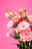 Opinião do close-up de flores e dos botões de florescência bonitos com folhas verdes Foto de Stock Royalty Free