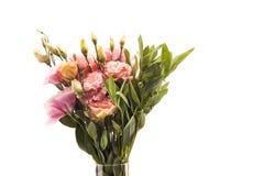Opinião do close-up de flores e dos botões de florescência bonitos com folhas verdes Imagens de Stock Royalty Free