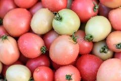 Opinião do close-up de tomates frescos Fotografia de Stock Royalty Free