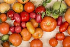 Opinião do close-up de tomates frescos Tomates suculentos novos Muitos tomates Montão dos tomates Fu da bandeja do mercado da exp Imagem de Stock Royalty Free