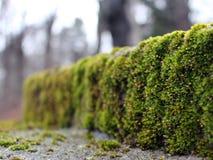 Opinião do close-up de uma pedra com musgo verde, 2015 foto de stock