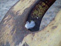 Opinião do close up de uma pena na âncora Fotos de Stock Royalty Free
