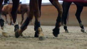 Opinião do close-up nos cascos dos cavalos que correm através de um campo empoeirado vídeos de arquivo