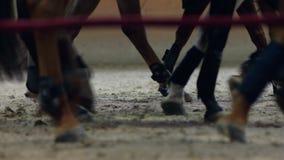 Opinião do close-up nos cascos dos cavalos que correm através de um campo empoeirado video estoque