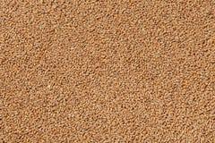 Opinião do close up Pale Pilsener Malt Grains Ingrediente para a cerveja fotografia de stock