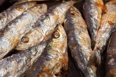 A opinião do close up a sardinha Grilled cozinhou em carvões quentes imagem de stock royalty free