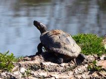 Opinião do close up a tartaruga imagem de stock royalty free