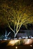Opinião do deserto da árvore na noite fotografia de stock royalty free