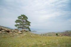 Opinião do dia da árvore nas costas do passo pequeno do mar do Lago Baikal imagens de stock