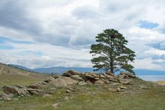 Opinião do dia da árvore nas costas do passo pequeno do mar do Lago Baikal imagem de stock royalty free
