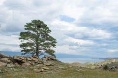Opinião do dia da árvore nas costas do passo pequeno do mar do Lago Baikal foto de stock royalty free