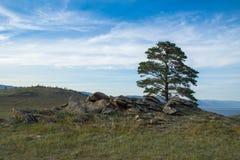 Opinião do dia da árvore nas costas do passo pequeno do mar do Lago Baikal imagem de stock