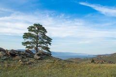 Opinião do dia da árvore nas costas do passo pequeno do mar do Lago Baikal foto de stock