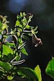 Opinião do dia de árvores verdes Fotos de Stock Royalty Free