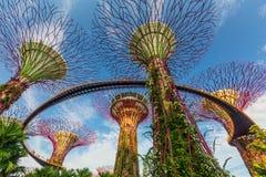 Opinião do dia do bosque de Supertrees em jardins pela baía imagem de stock