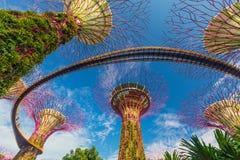 Opinião do dia do bosque de Supertrees em jardins pela baía Imagens de Stock