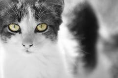 Opinião do gato Fotos de Stock