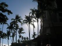 Opinião do hotel das palmeiras Foto de Stock