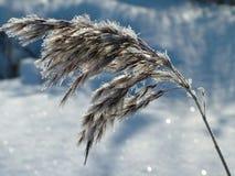Opinião do inverno Imagem de Stock Royalty Free