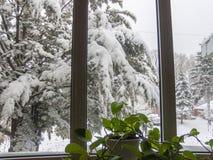 Opinião do inverno da neve na janela fotografia de stock