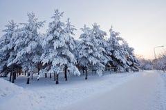 Opinião do inverno no nascer do sol imagens de stock royalty free