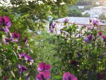 Opinião do jardim Fotografia de Stock Royalty Free