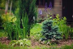 Opinião do jardim com os vários coníferas e perennials imagem de stock royalty free