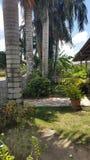 Opinião do jardim de uma casa agradável em suriname Imagens de Stock