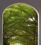 Opinião do jardim dos ramos de árvore do balcão da janela do arco no tempo de manhã Imagens de Stock Royalty Free
