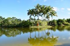 Opinião do lago das palmeiras Foto de Stock Royalty Free