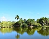 Opinião do lago do parque e das palmeiras Fotografia de Stock Royalty Free