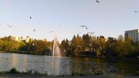 Opinião do lago em Duvbo, Sundbyberg, Éstocolmo, Suécia imagens de stock