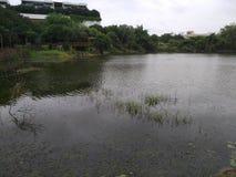 Opinião do lago no alvorecer foto de stock