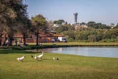 Opinião do lago do parque de Barigui com gansos e da torre panorâmico no fundo - Curitiba, Parana, Brasil fotos de stock royalty free