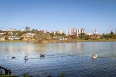Opinião do lago do parque de Barigui com gansos e skyline da cidade - Curitiba, Parana, Brasil fotos de stock royalty free