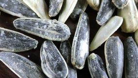 Opinião do macro das sementes de girassol video estoque