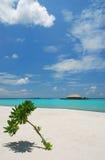 Opinião do mar com árvore Imagens de Stock Royalty Free