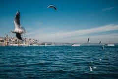 Opinião do mar com gaivotas e navios em Istambul Fotos de Stock Royalty Free