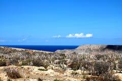Opinião do mar da perspectiva das plantas Foto de Stock