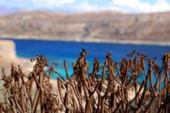 Opinião do mar da perspectiva das plantas Fotografia de Stock