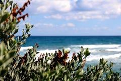 Opinião do mar da perspectiva das plantas Fotos de Stock