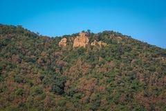 Opinião do monte da floresta do polo Fotografia de Stock Royalty Free