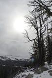 Opinião do ninho do falcão da montanha de Darland, cascatas, perto de Tampico, WA foto de stock
