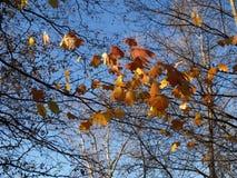 Opinião do outono Foto de Stock Royalty Free