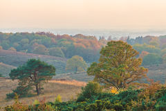 Opinião do outono do parque nacional Veluwe nos Países Baixos Foto de Stock